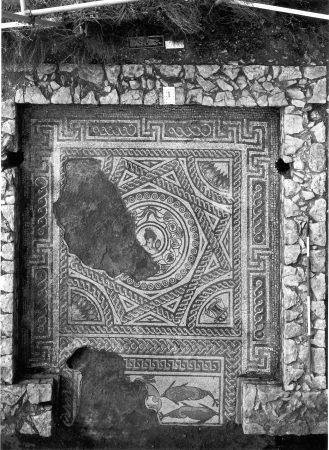 Venus mosaic