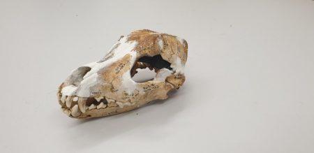 Iron Age Dog